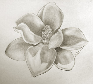 "Magnolia 12 x 10"" Graphite on paper"